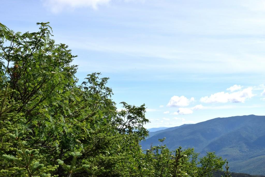 Leaves-in-Appalachia