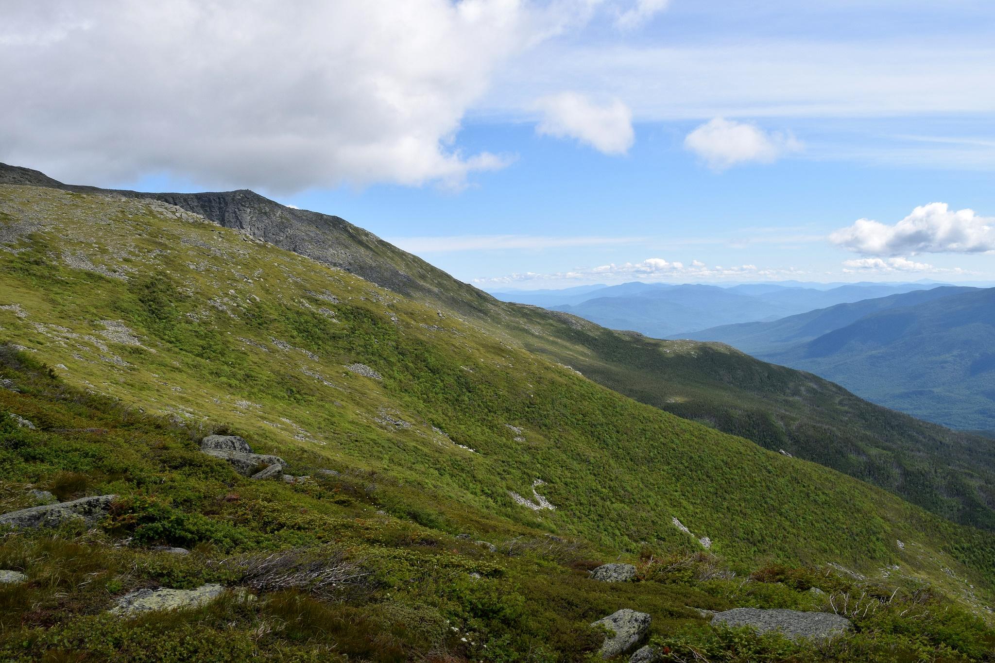 Mt-Washington-Alpine-Garden-Trail