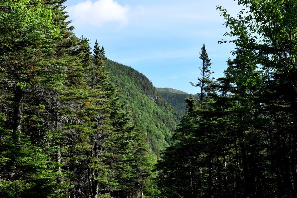 Tuckerman's-Ravine-Trail-Mt-Washington